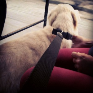 Enjoying a rickshaw ride :)